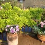 Ornamental planting.