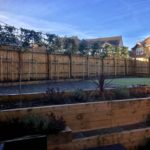 Pleached photinia privacy screen 2.