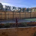 Pleached photinia privacy screen.