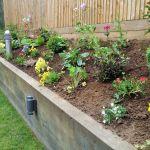 Planting - Oak raised bed.